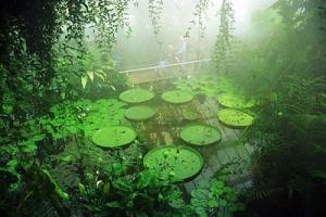 Kew Gardens, UK
